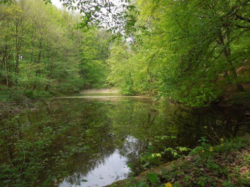 Der Tiergarten in Schleswig